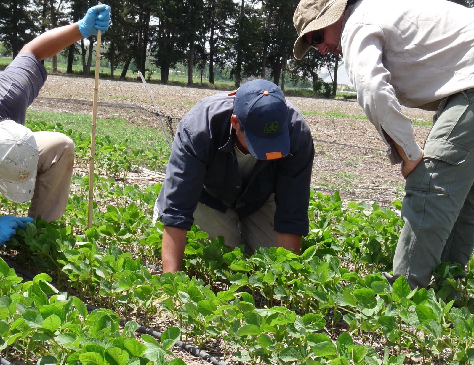 2019 - Sanidad vegetal para cultivos intensivos - Manejo de enfermedades