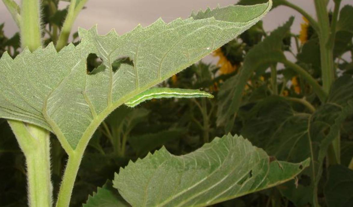 2021*-Modo de acción de los insecticidas de síntesis química