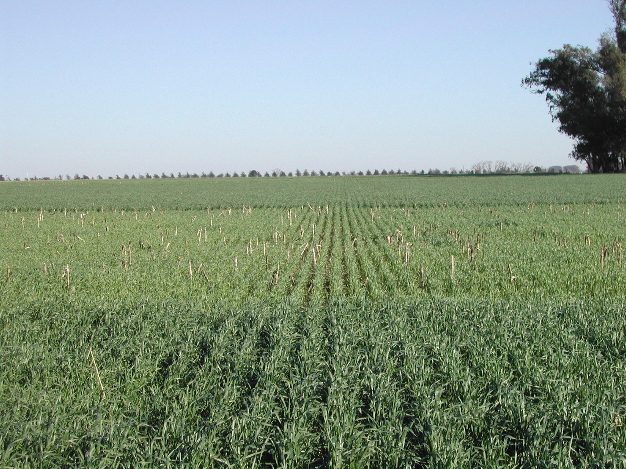 2021*-Claves del manejo de nutrientes en sistemas de cultivos de alta productividad