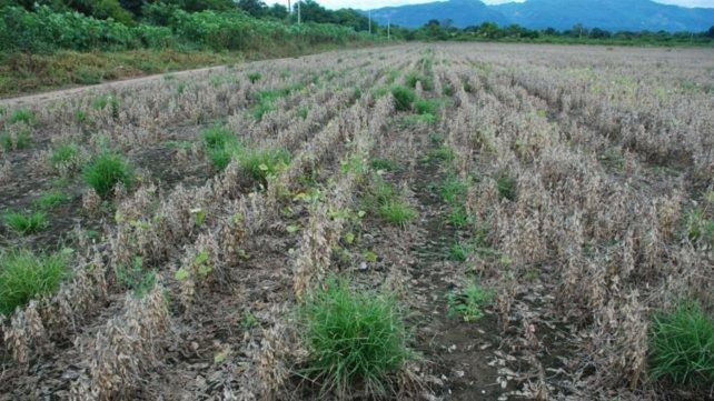 2021 - Resistencia a herbicidas. .